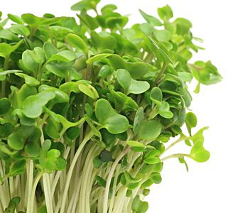 broccoli-sprout2.jpg